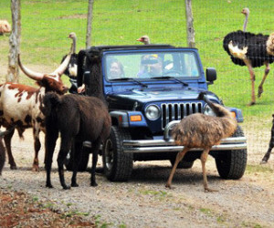Circle G Ranch – Drive-Thru Safari and Petting-Zoo Outing for Two or Four (Up to 56% Off)