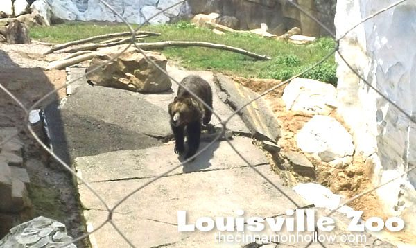 Louisville Zoo: Grizzly Bear
