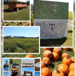 Take A Hayride At Oakes Farm In Corryton, TN!