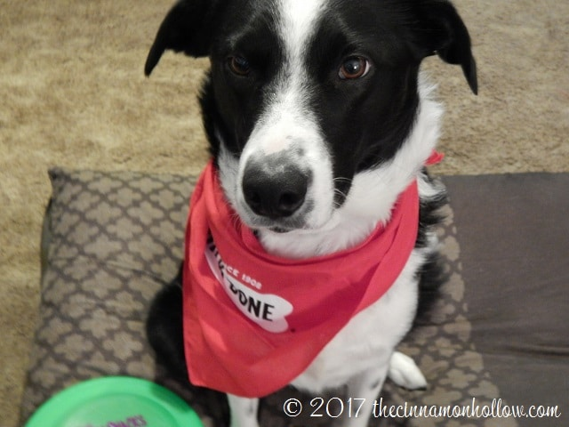 National Dog Biscuit Day - Spoiling Jasper With Milk-Bone Farmer's Medley