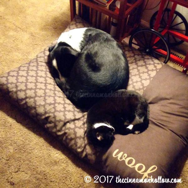 Jasper and Honey. America Loves Pets TrustedHousesitters.com