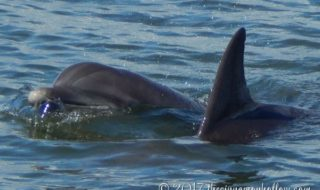 Blogging With Dolphins: Our Jekyll Island Dolphin Tour