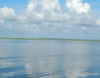 Jekyll Island Dolphin Tour