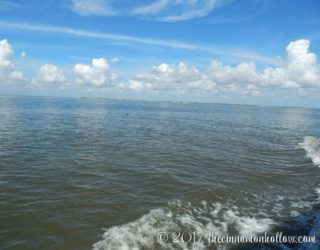 jekyll-island-dolphin-tours-view-3