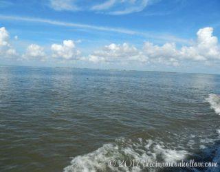 jekyll-island-dolphin-tours-view-3