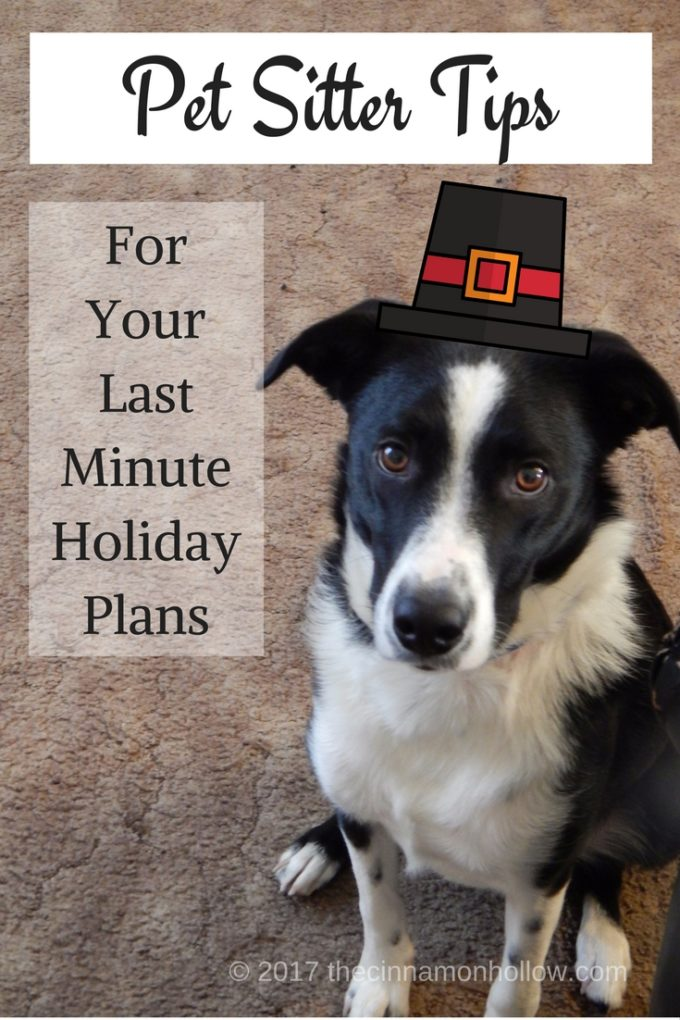 Pet Sitter Tips For Your Last Minute Holiday Plans