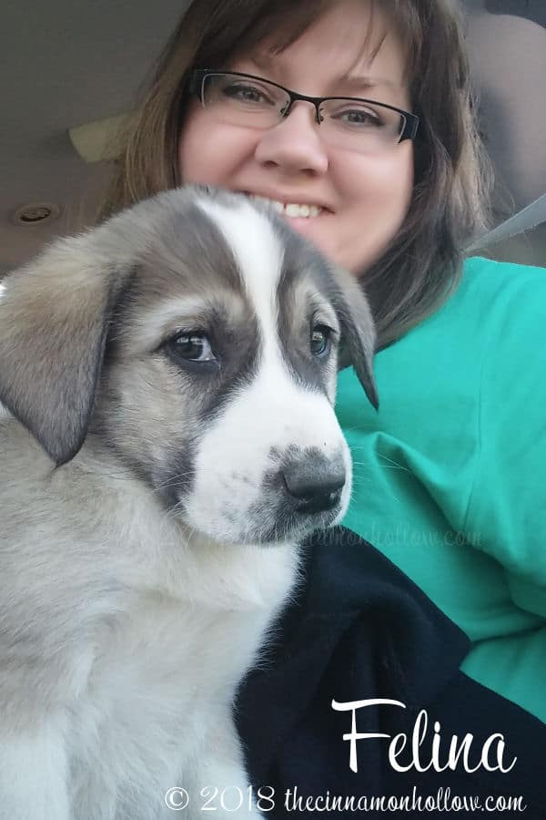 Welcome Our New Anatolian Shepherd Livestock Guardian Dog