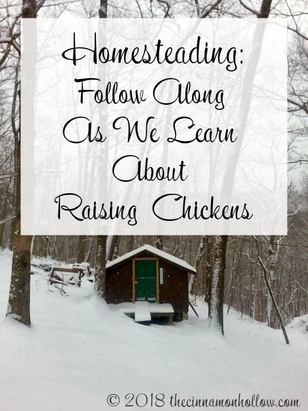 Follow Along As We Learn About Raising Chickens