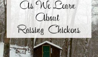 Chicken Coop - Raising Chickens