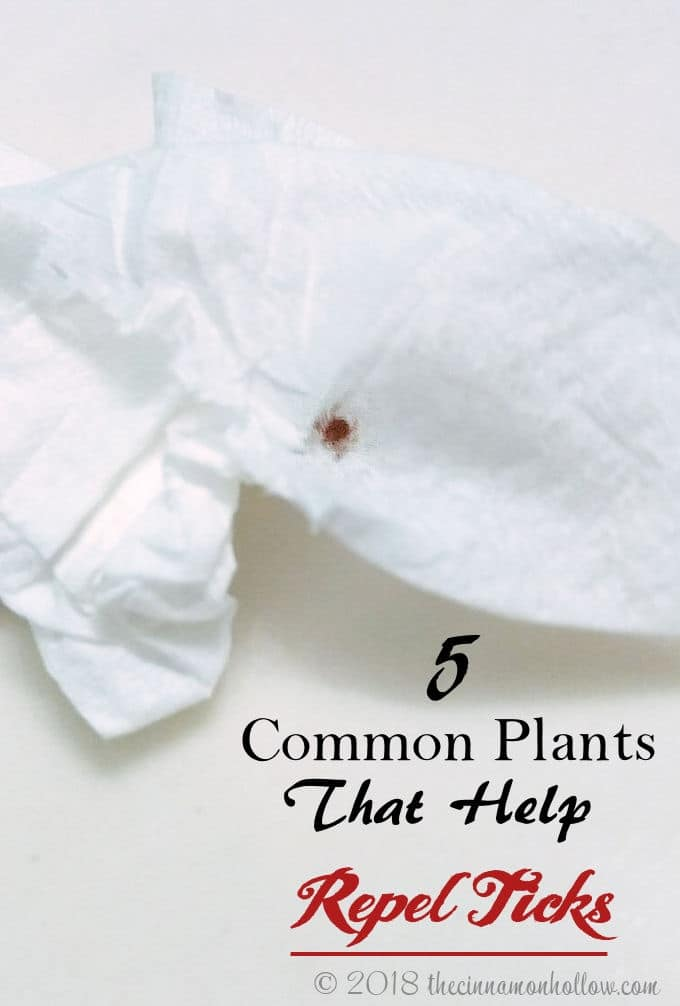 5 Common Plants That Help Repel Ticks
