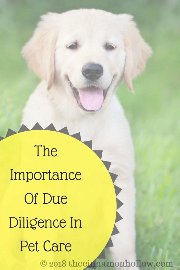 The Importance Of Due Diligence In Pet Care