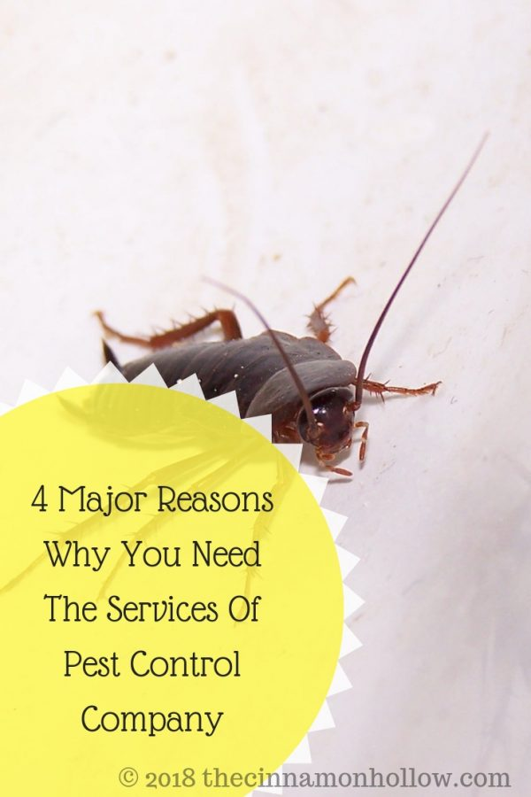 4 Major Reasons Why You Need The Services Of Pest Control Company