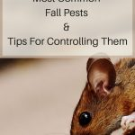 5 Most Common Fall Pests & Tips For Controlling Them