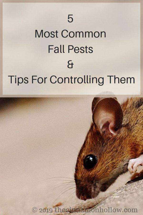 Common Pests: Pest Control