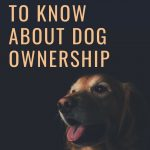All You Need To Know About Dog Ownership