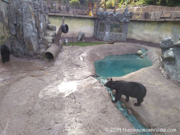 Ober Wildlife Encounter Bears