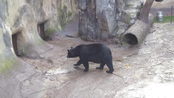 Ober Wildlife Encounter Bear