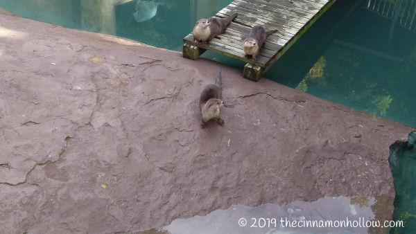 Ober Wildlife Encounter Otter