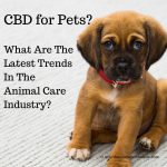 CBD for Pets? What are the Latest Trends in the Animal Care Industry?