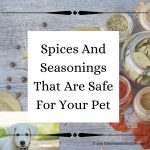 Spices And Seasonings That Are Safe For Your Pet