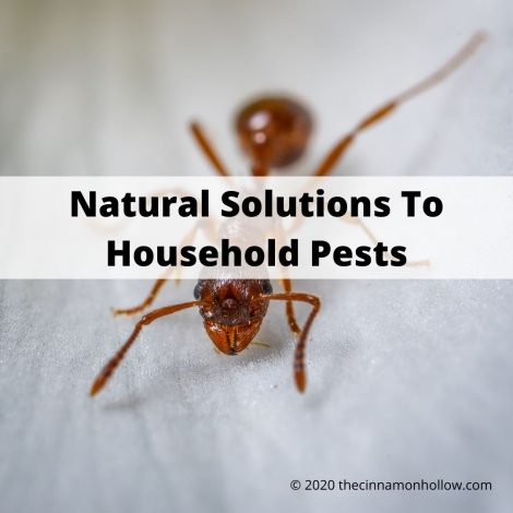 Natural Solutions To Household Pests