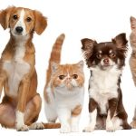 3 Ways To Care For Your Pet