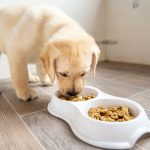Simple Tips for Feeding Your Dog Correctly