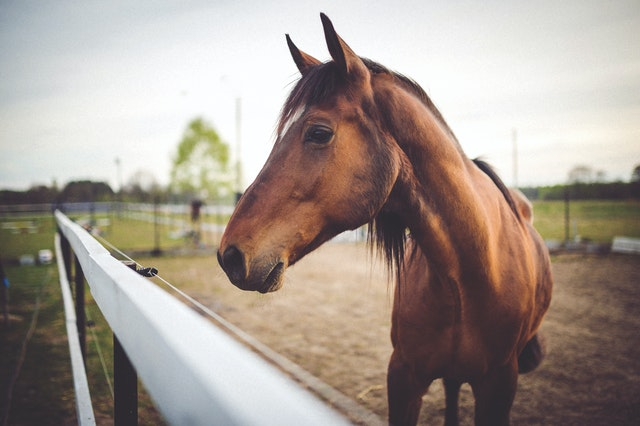 Things to know before buying a horse
