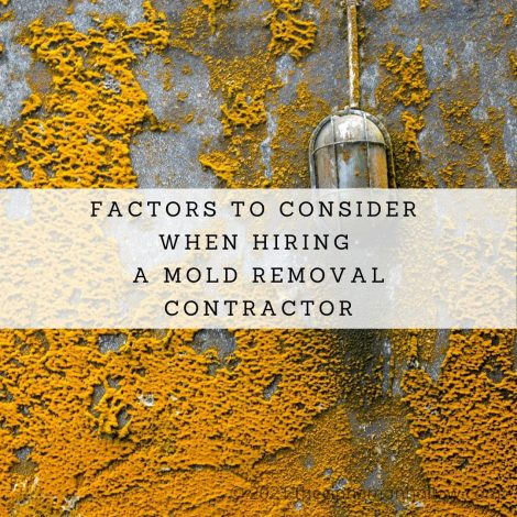 Factors To Consider When Hiring A Mold Removal Contractor