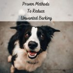 Proven Methods To Reduce Unwanted Barking
