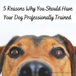 5 Reasons Why You Should Have Your Dog Professionally Trained