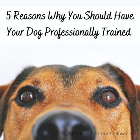 5 Reasons Why You Should Have Professional Dog Training