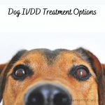 Dog IVDD Treatment Options