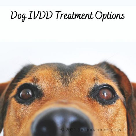 Dog IVDD Treatment Options