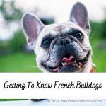 Getting To Know French Bulldogs