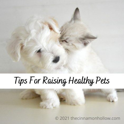 Animals - Tips For Raising Healthy Pets