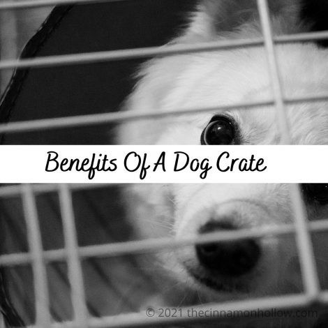 Benefits Of A Dog Cage