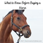 What To Know Before Becoming Horse Owners