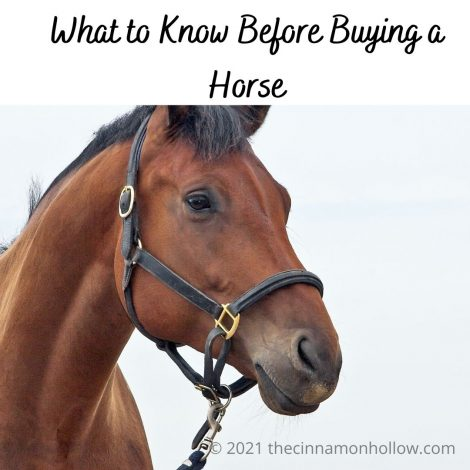 What to Know Before Buying a Horse