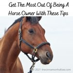 Being A Horse Owner