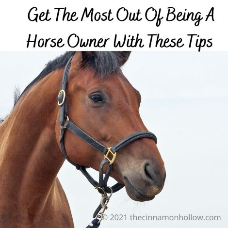 Being Horse Owners