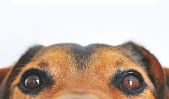 Tips For Bringing A Dog Home