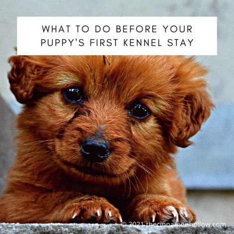 What To Do Before Your Puppy's First Kennels