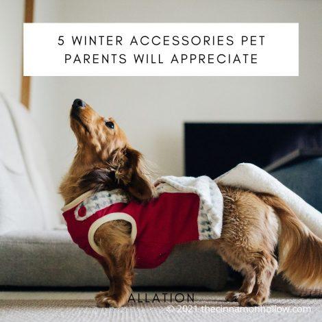 5 Winter Accessories Pet Parents Will Appreciate