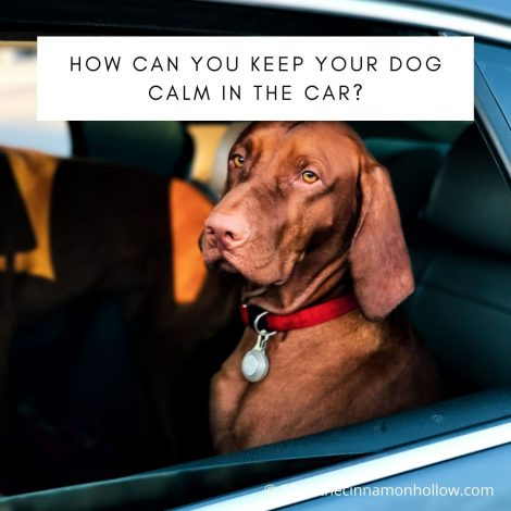 Keep Your Dog Calm in the Car